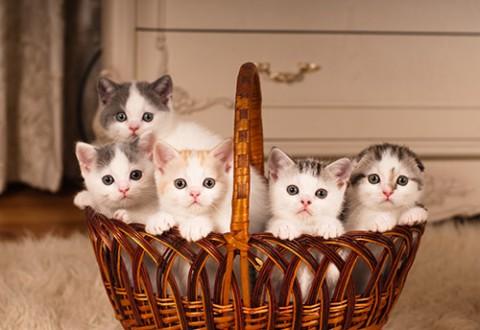 kittens-in-basket